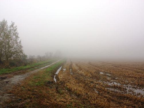 霧の一日 2