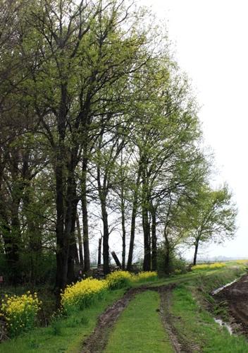 雨の前の田園