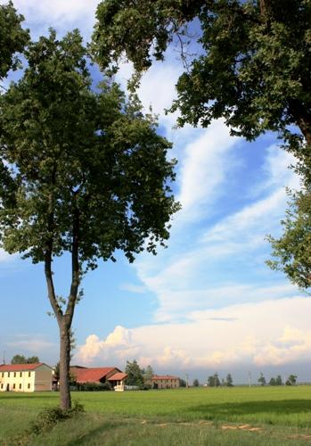 夏の田園と雲