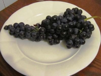 お土産のブドウ