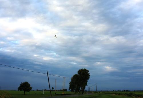 田園の景色3
