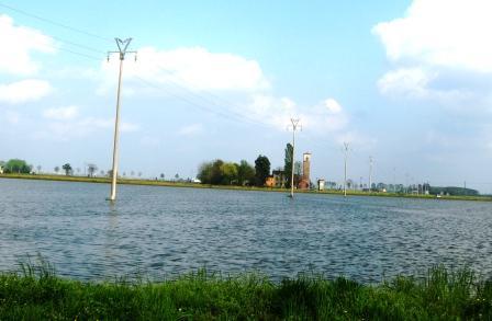 水田の中の電柱