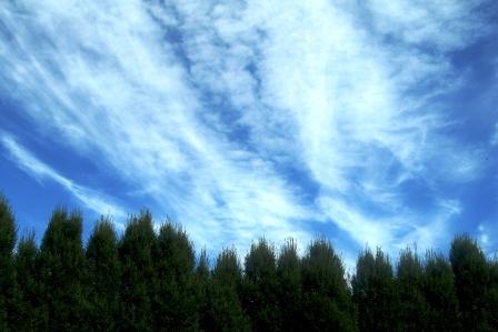 午後の空。