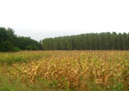 2008年9月5日 車窓から
