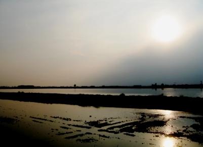 日没の頃の水田