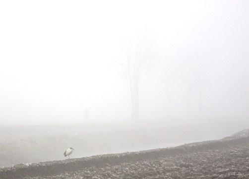冬の田園 1