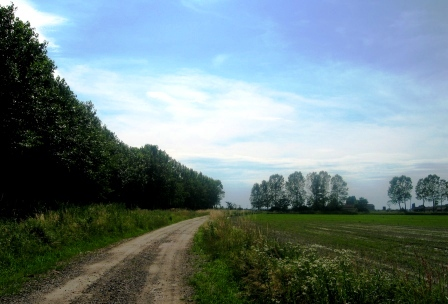 農場に続く道