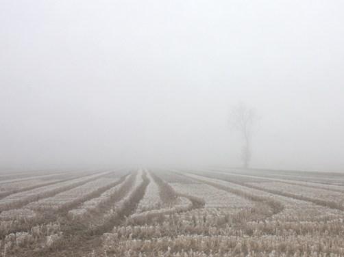 冬の田園 3