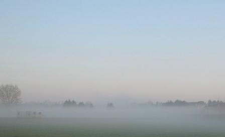 霧がかかった小麦畑