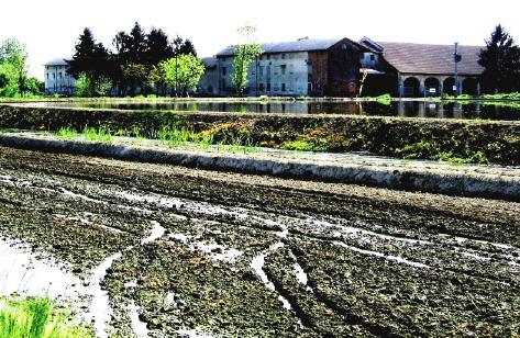 農場 17052006