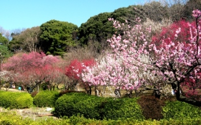 小石川植物園 1