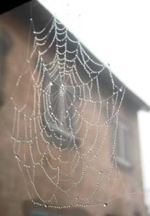 クモの巣に水滴