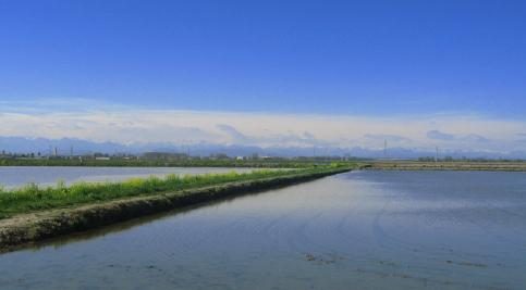 春の水田13042006