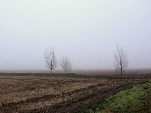 霧の一日 1