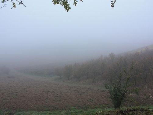 霧のモンフェラート