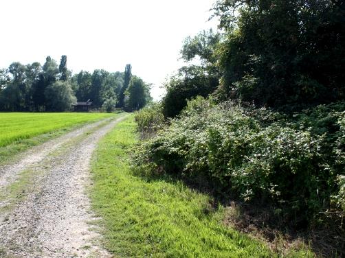 自然保護地区への道