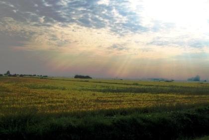 夕方の田園風景 6.10.2006