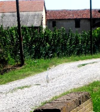 15agosto2007 airone