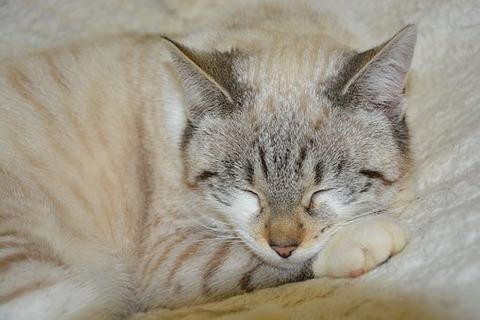 cat-3046523__340