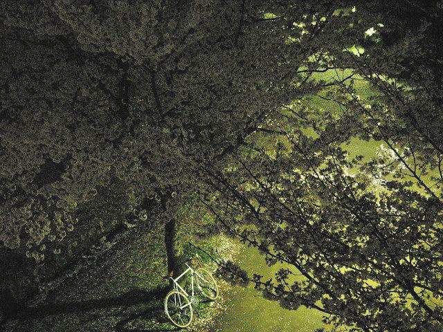 4_9近所の桜19_001