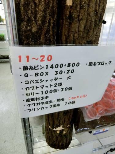 センター 館山 クワガタ