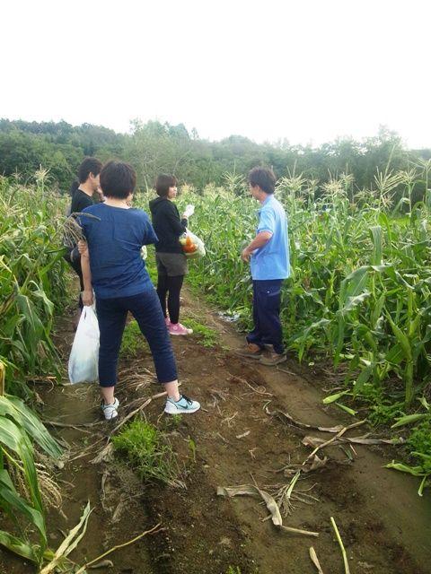 ピュアホワイト収穫1
