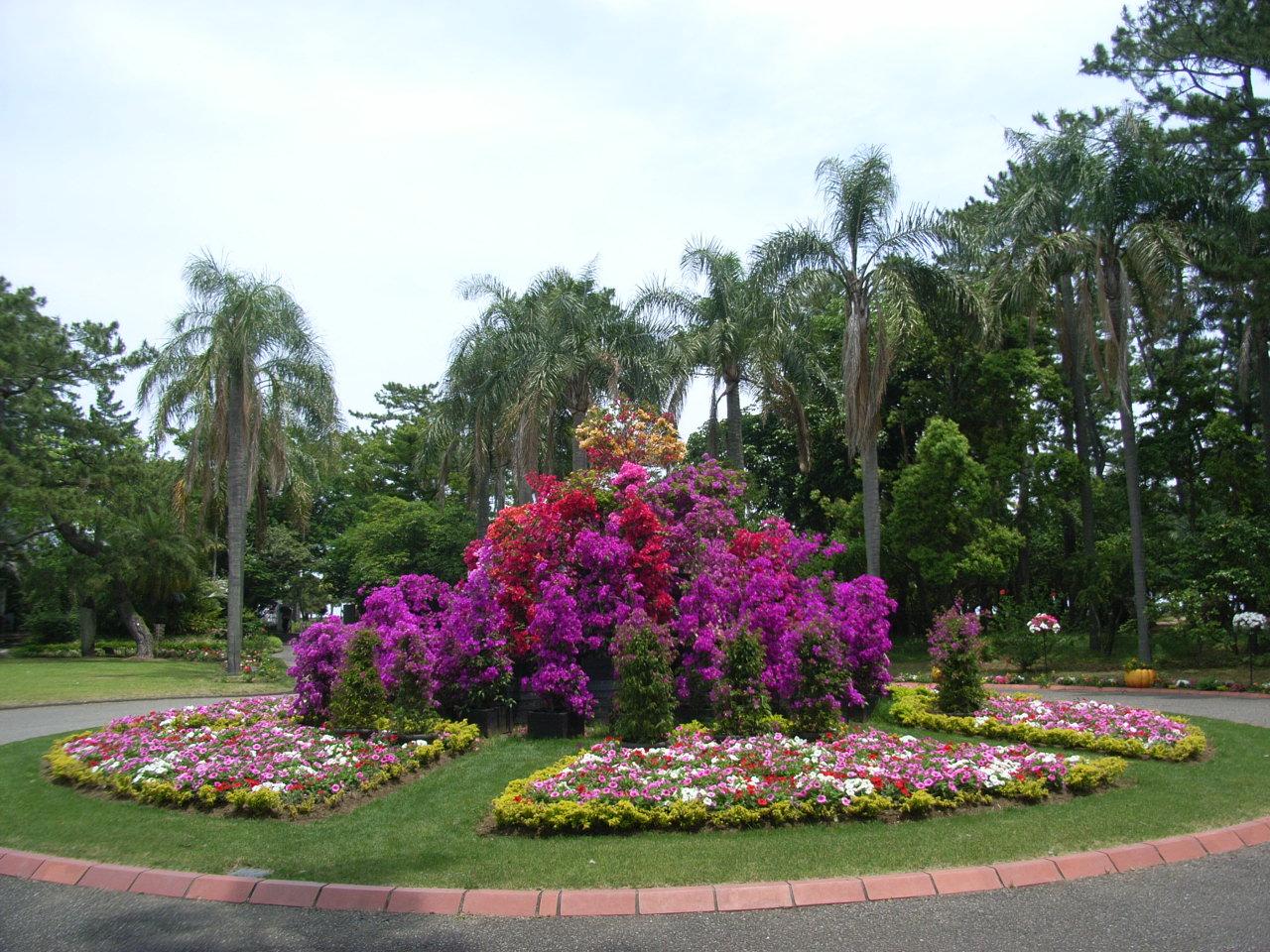 ブーゲンビリア 画像 宮崎県立青島亜熱帯植物園でブーゲンビリアマツリが開かれている。