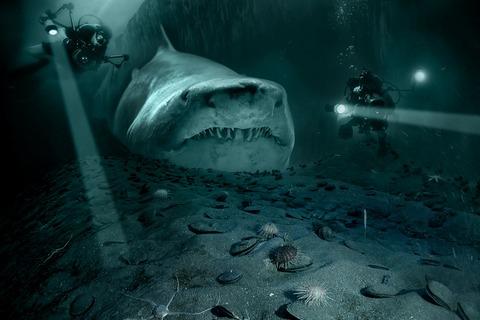 shark-5782766_1920