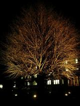 農学部の木