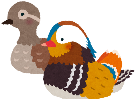 bird_oshidori