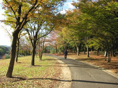 陶芸家生活の紅葉の公園散歩