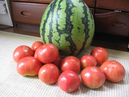 スイカとトマトが稔りました