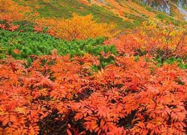 日本の秋、紅葉の風景