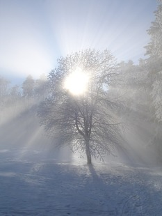 winter-sun-434921_960_720