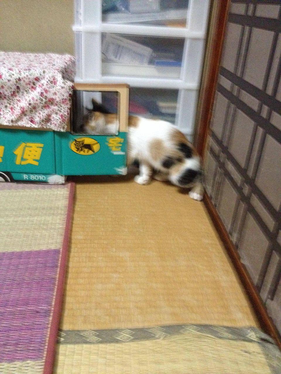 http://livedoor.blogimg.jp/akan2ch/imgs/0/2/02663eea.jpg