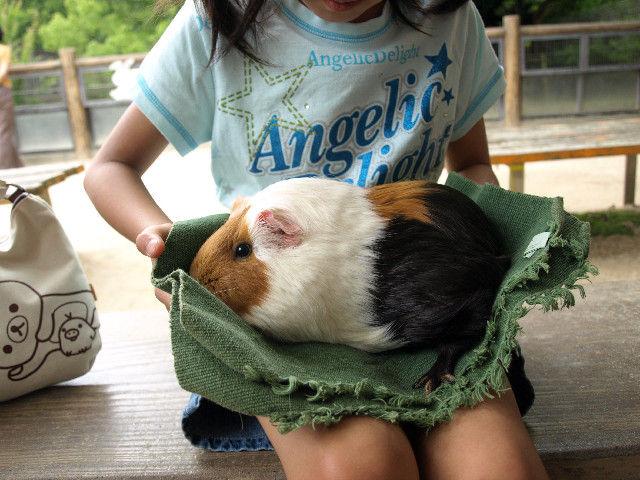 http://livedoor.blogimg.jp/akan2ch/imgs/0/5/05672f00.jpg