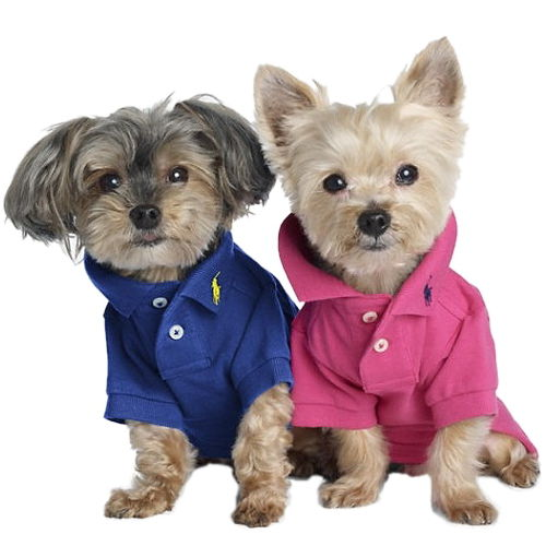 犬に「服」って必要なの? 画像と動画で癒されますか?