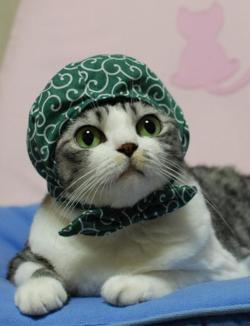 窃盗常習犯のネコが発見される 4年間も日用品やオモチャなどを窃盗