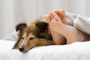 【湯たんぽネコの時代】 寝室にペットがいると睡眠の質が上がる!!