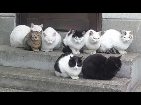 家の車庫に野良猫いるんだけどどうしたら飼えるようになる?