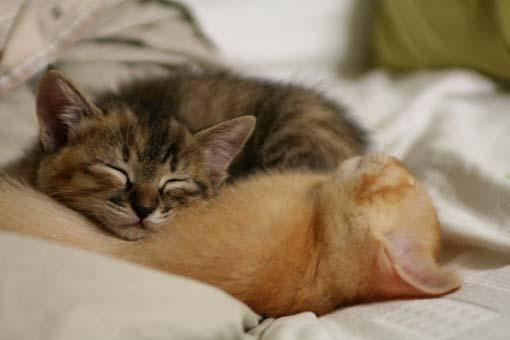 朝、飼いネコに起こされる感覚ってどんな感じなの???