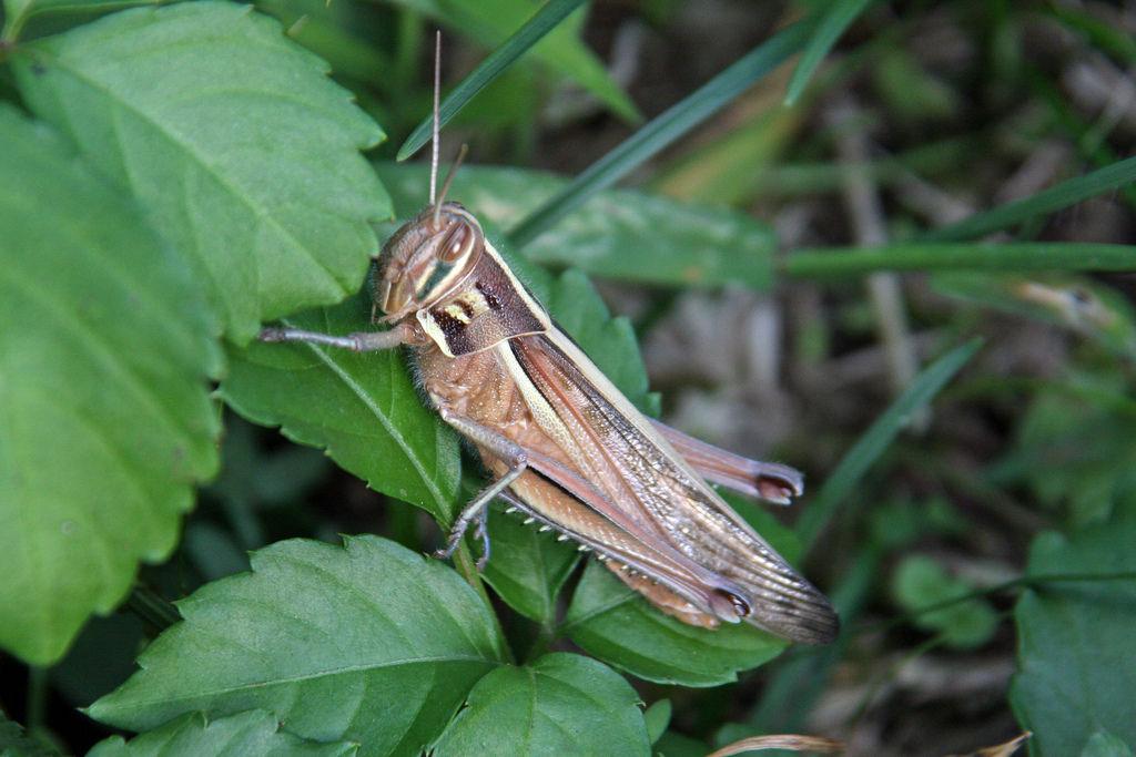【恐怖】田舎のコンビニに大量発生するイナゴや蛾がやばい【微閲覧注意】