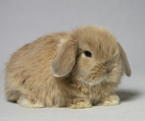 【悲報】ペットショップの子ウサギの耳…切断される…【絶許】