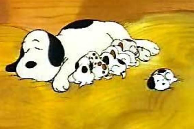 【恐るべき子供達】 中国★遺伝子操作で筋肉量を2倍に増強したビーグル犬を「製造」 ネット民「食料にするんだろ」