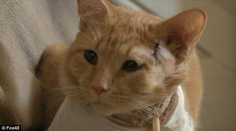 流れ弾にたまたま当たっただけのネコ、少年の身代わりになったヒーローと祀り上げられる