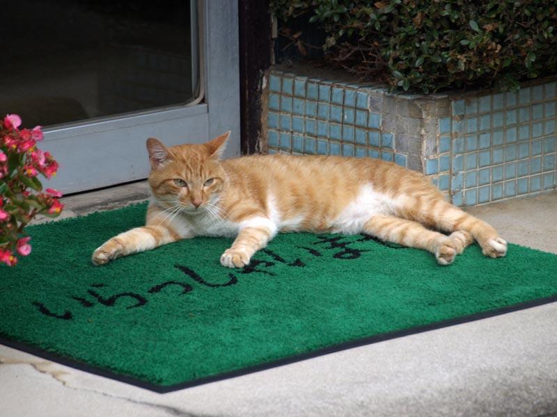 【反則だろこれ】 CNNで報じられ世界的ブレイク!コンビニに住む猫「クリーム兄貴」 写真集まで販売wwwwww