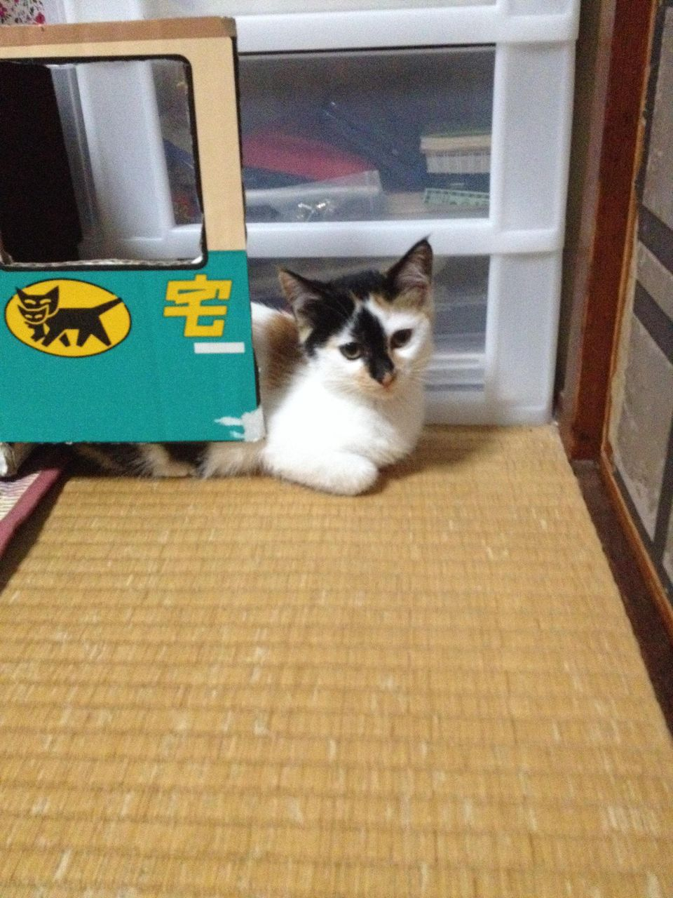 http://livedoor.blogimg.jp/akan2ch/imgs/6/c/6c24df66.jpg