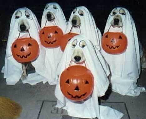 【自己満】ハロウィンのイヌの仮装のクオリティが高いと話題に 一方ジャップは…