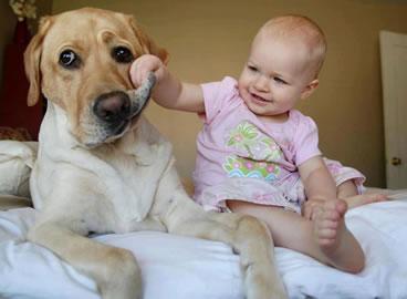 【動画】人間の赤ちゃんに毛布をかけるイヌが話題に