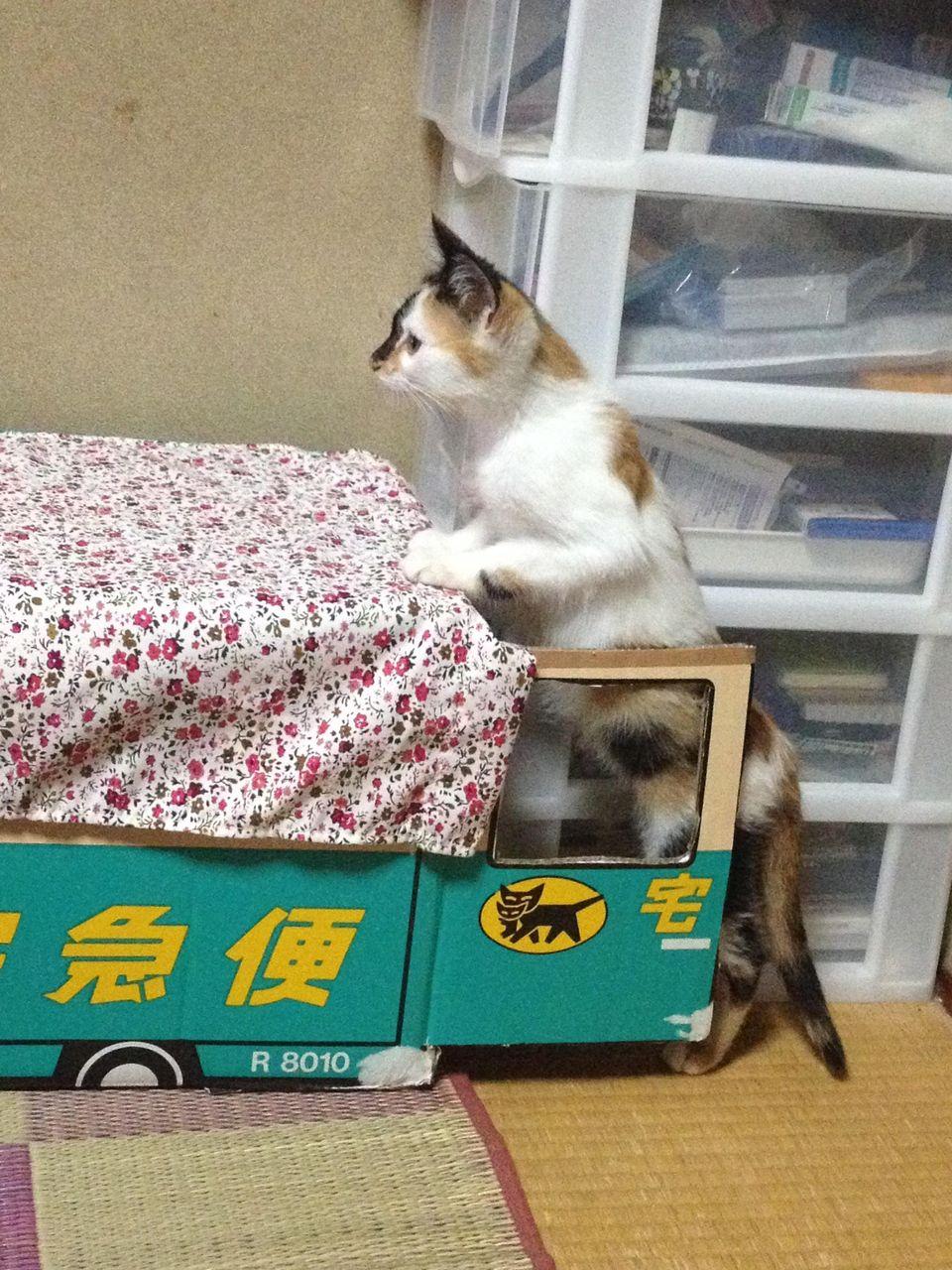 http://livedoor.blogimg.jp/akan2ch/imgs/9/4/94095d48.jpg